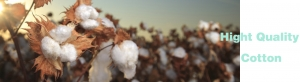 High quality Cotton